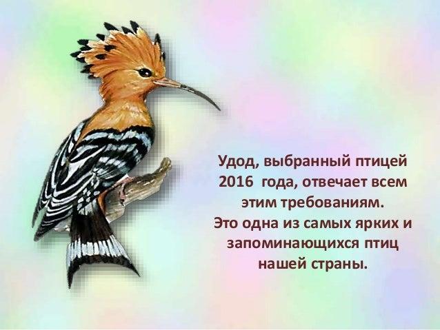 птица 2016 скачать торрент - фото 7