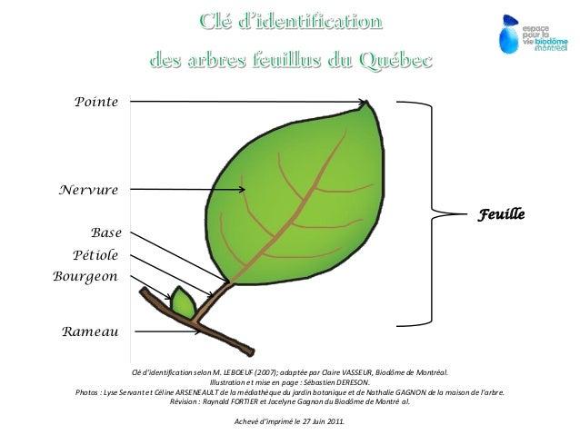 Feuille Pointe Nervure Base Pétiole Bourgeon Rameau Clé d'identification selon M. LEBOEUF (2007); adaptée par Claire VASSE...