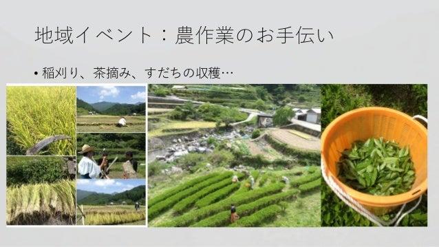地域イベント:農作業のお手伝い • 稲刈り、茶摘み、すだちの収穫…