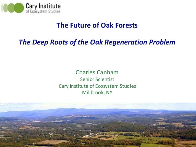 The Future of Oak Forests The Deep Roots of the Oak Regeneration Problem Charles Canham Senior Scientist Cary Institute of...