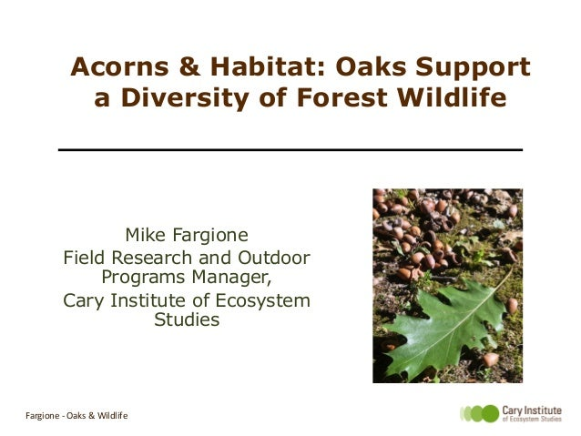 Acorns & Habitat: Oaks Support a Diversity of Forest Wildlife Mike Fargione Field Research and Outdoor Programs Manager, C...