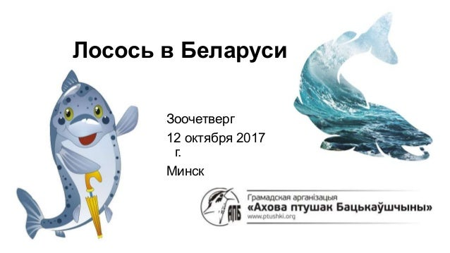 Лосось в Беларуси Зоочетверг 12 октября 2017 г. Минск