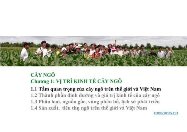 2017 Hoàng Kim.  Bài giảng cây ngô