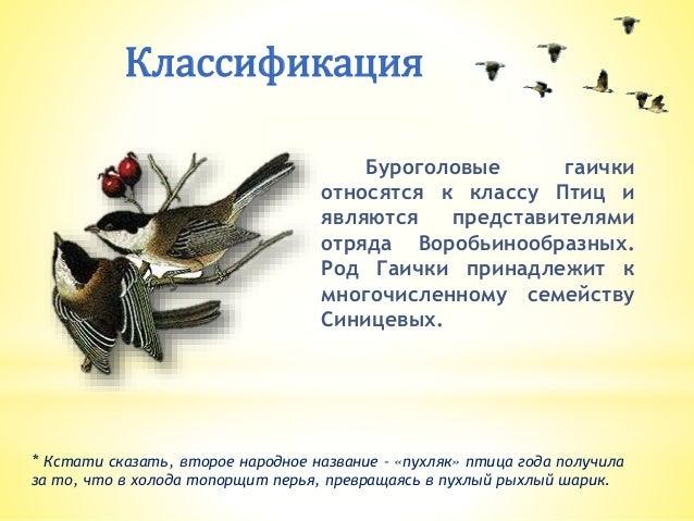 скачать торрент птица 2017 - фото 10