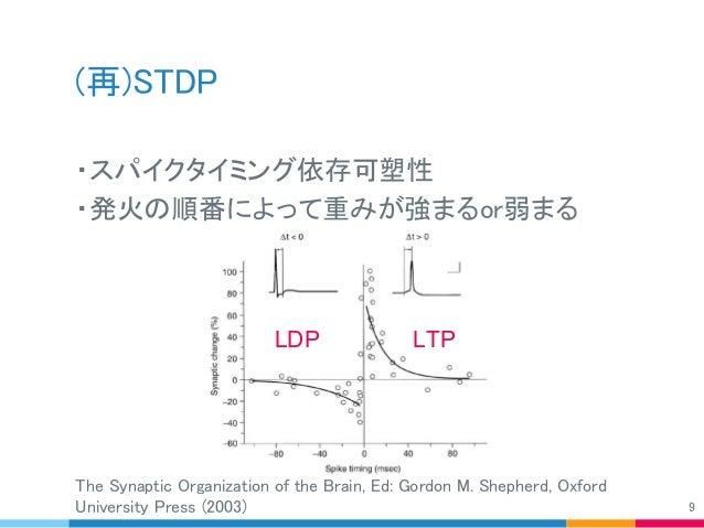 (再)STDP ・スパイクタイミング依存可塑性 ・発火の順番によって重みが強まるor弱まる The Synaptic Organization of the Brain, Ed: Gordon M. Shepherd, Oxford Unive...