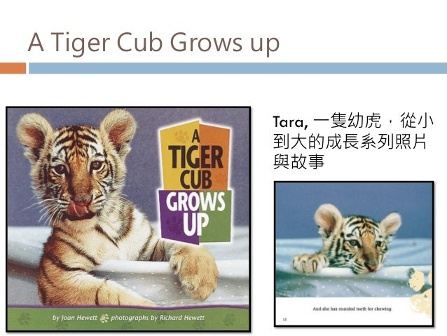 A Tiger Cub Grows up Tara, 一隻幼虎,從小 到大的成長系列照片 與故事