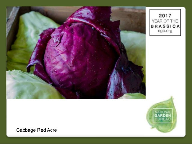 2017 national garden bureau's #yearofthebrassica