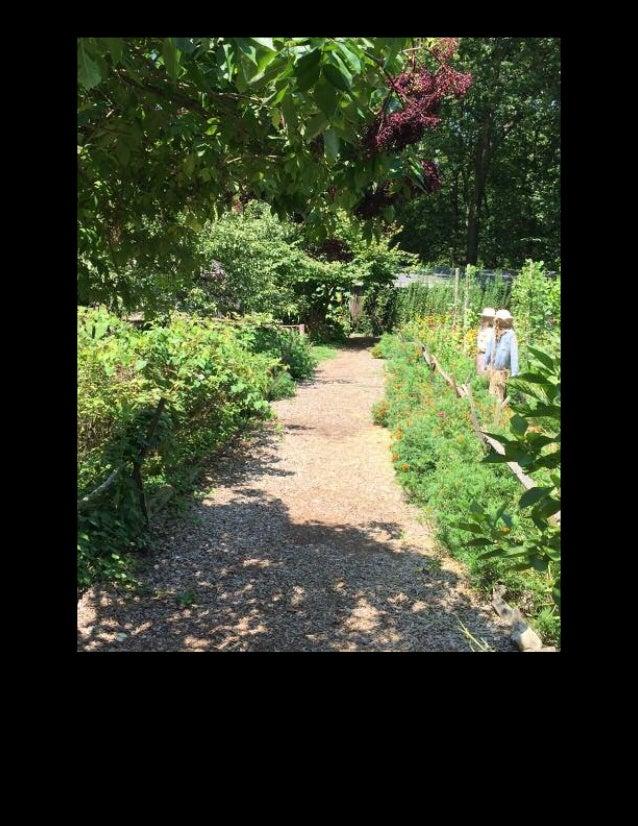 Cottage Garden Perennial Dragon Lore Daylily Hemerocallis
