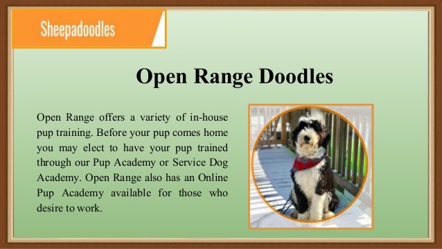 Open Range F1b Micro Sheepadoodle in Eckert CO | Open Range Pups