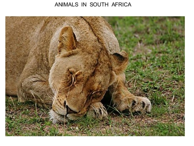 ANIMALS IN SOUTH AFRICA
