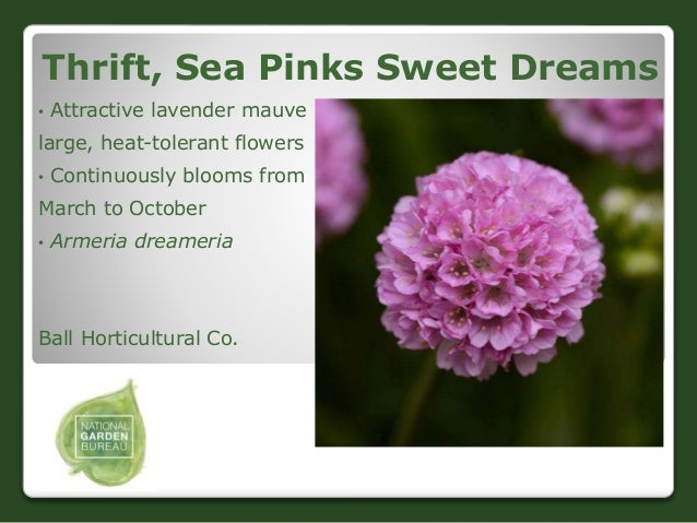 2018 ngb new varieties flowers and ornamentals 46 thrift sea pinks mightylinksfo