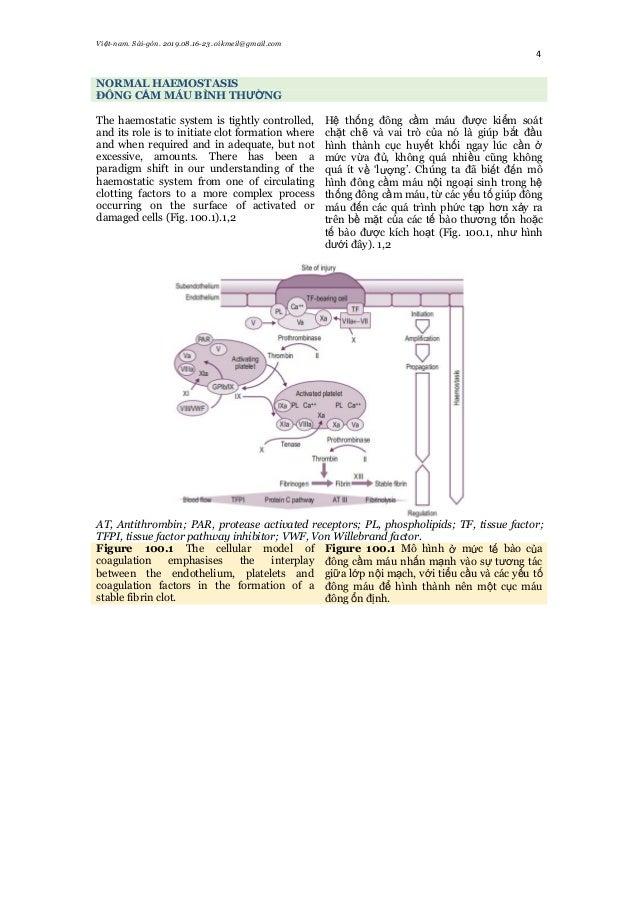 Việt-nam. Sài-gòn. 2019.08.16-23. oikmeil@gmail.com 4 NORMAL HAEMOSTASIS ĐÔNG CẦM MÁU BÌNH THƯỜNG The haemostatic system i...