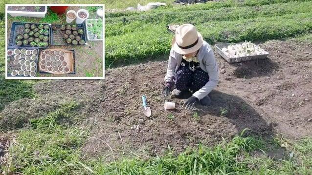 https://enechange.jp/articles/mega-solar 悲しみのメガソーラー