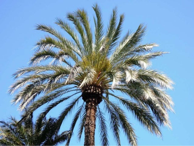 "Welkom Voorganger mevr Ineke Baron Organist dhr Johannes de Vries Thema: ""Wat deed die boom daar in het paradijs"""