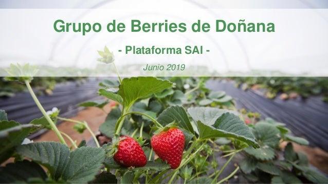 Grupo de Berries de Doñana - Plataforma SAI - Junio 2019