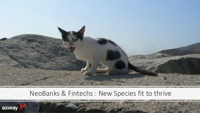 NeoBanks & Fintechs : New Species fit to thrive