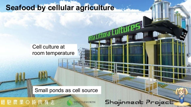 Seafood by cellular agriculture Cell culture at room temperature Small ponds as cell source