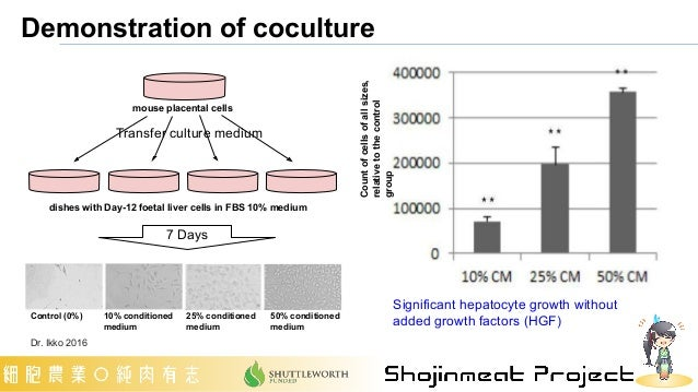 Demonstration of coculture Significant hepatocyte growth without added growth factors (HGF) Control (0%) 10% conditioned m...