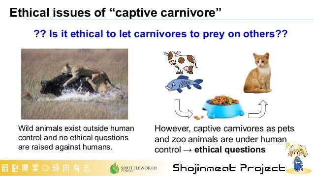 """Ethical issues of """"captive carnivore"""" Wild animals exist outside human control and no ethical questions are raised against..."""