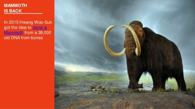 MAMMOTH IS BACK In 2015 Hwang Woo-Suk got the idea to clone a Mammoth from a 28,000 old DNA from bones