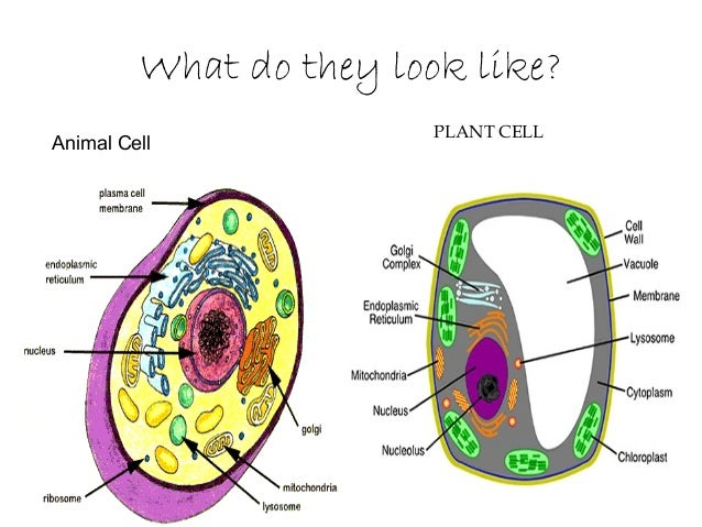 cell structure and function The cell is a small, but complex structure take a look inside the outer plasma membrane of a cell and discover the functions of some common.