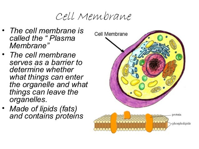 2 03 cell structure and function
