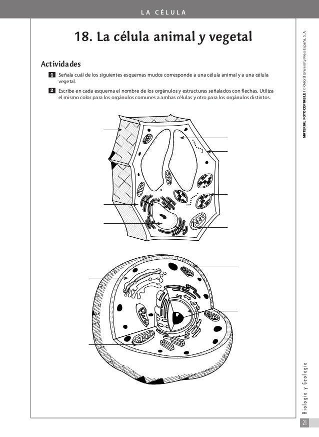 207028713 1 Ejercicios De Biologia Y Geologia Para Cuarto De La Eso D