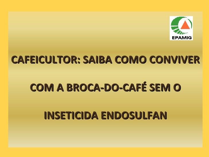 CAFEICULTOR: SAIBA COMO CONVIVER COM A BROCA-DO-CAFÉ SEM O INSETICIDA ENDOSULFAN