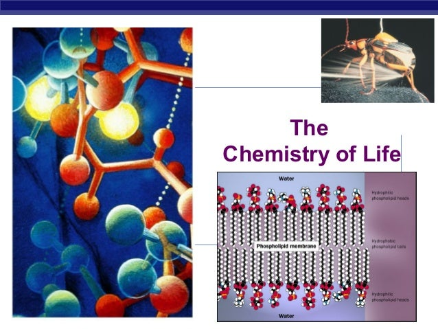 AP Biology 2007-2008 The Chemistry of Life