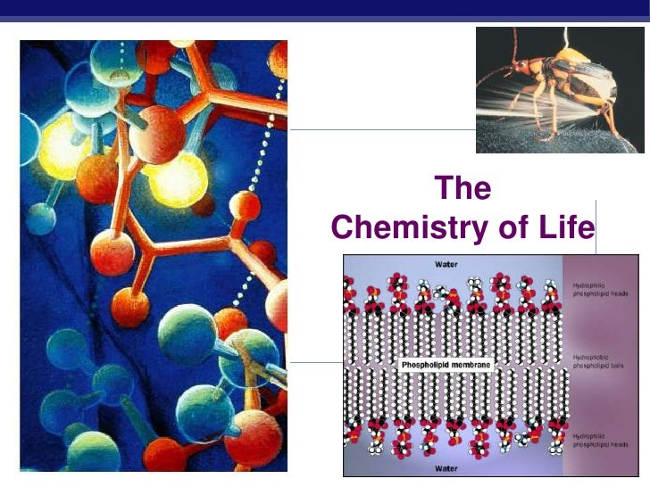 2009-2010<br />The Chemistry of Life<br />
