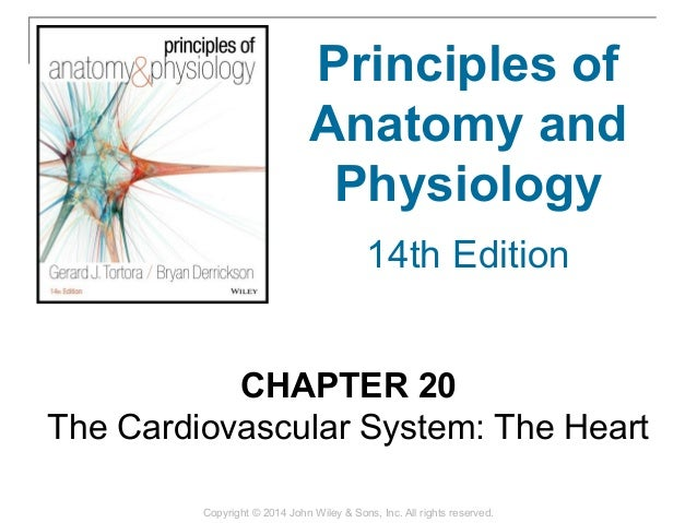 20 Chapter 20 The Cardiovascular System The Heart