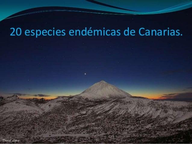 20 especies endémicas de Canarias.