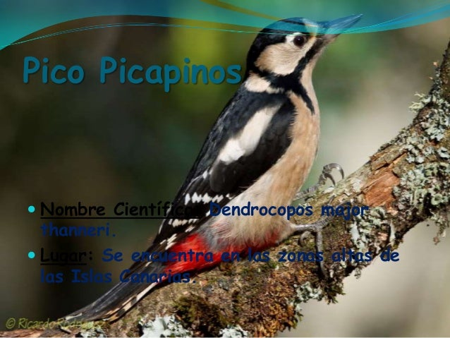 From Lat. coccum, cocceus and coccinus to sp. coco, cocho ...