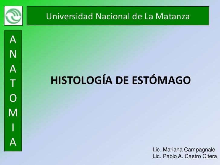 Universidad Nacional de La MatanzaANAT    HISTOLOGÍA DE ESTÓMAGOOMIA                            Lic. Mariana Campagnale   ...