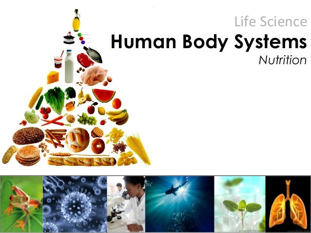 Life Science Human Body Systems Nutrition