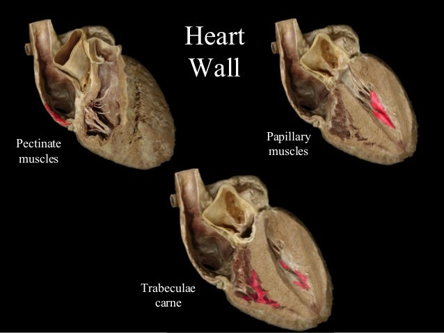 ap 2 cardiovascular system Diagram cardiovascular respiratory system diagram cardiovascular respiratory system  paper 2 solution 2015 ap physics b multiple choice answers 2015 2016 physics.