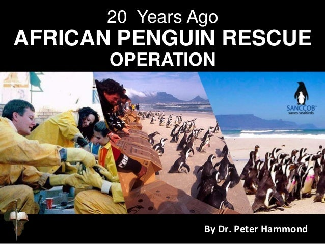 20 Years Ago AFRICAN PENGUIN RESCUE OPERATION By Dr. Peter Hammond