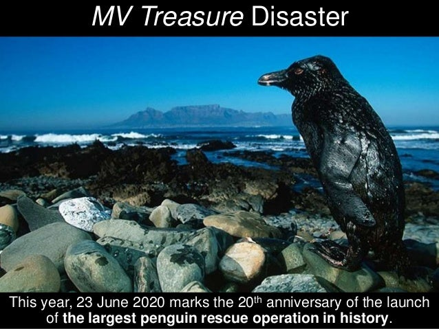 20 years ago - African Penguin Rescue  Slide 3