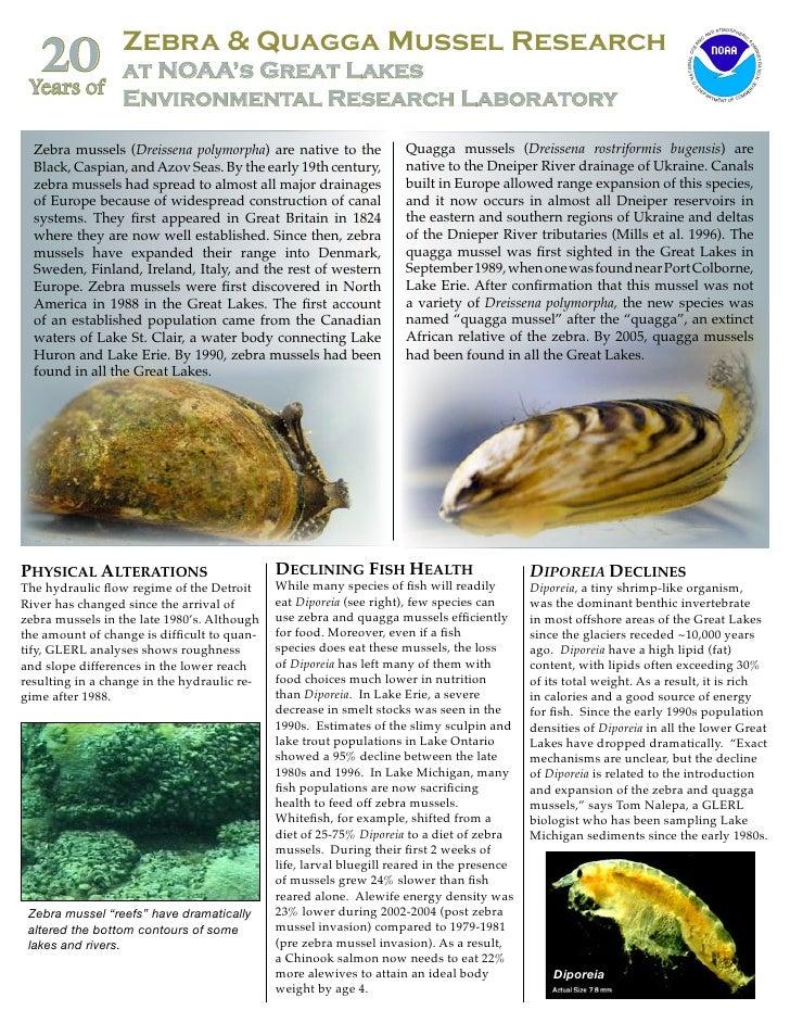 Zebra Mussels and Quagga