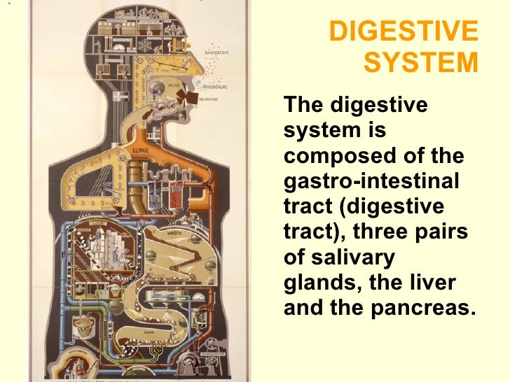 DIGESTIVE  SYSTEM <ul><li>The digestive system is composed of the gastro-intestinal tract (digestive tract), three pairs o...