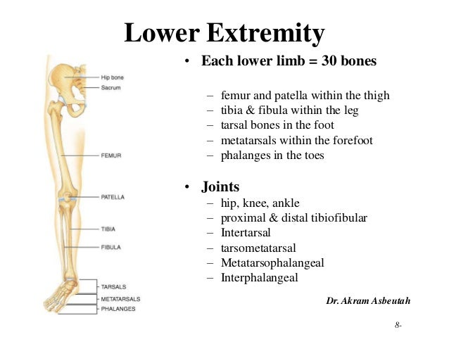 210 lower limb rs