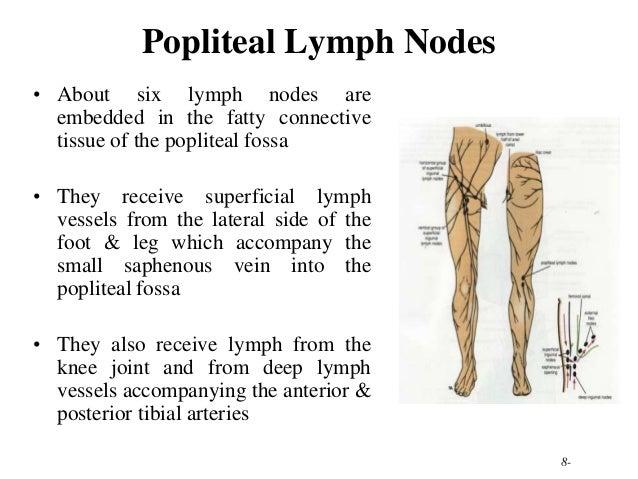 Niedlich Location Of Lymph Nodes In Foot Zeitgenössisch - Anatomie ...