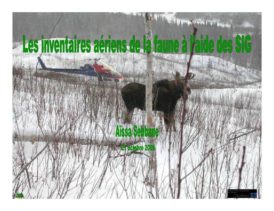 Les inventaires aériens de la grande faune     La gestion des espèces fauniques s'appuient sur la densité des populations....