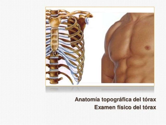 Anatomía topográfica del tórax Examen físico del tórax