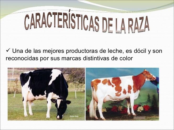 Lechera de colombia - 2 5