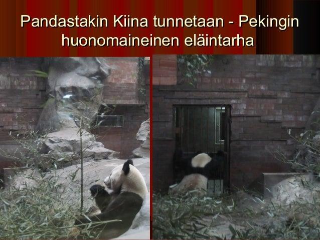 Pandastakin Kiina tunnetaan - Pekingin    huonomaineinen eläintarha