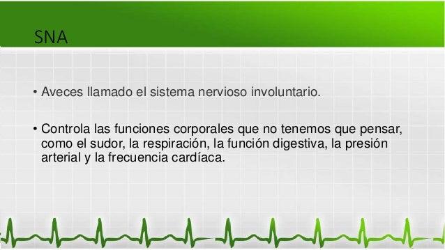 SNA • Aveces llamado el sistema nervioso involuntario. • Controla las funciones corporales que no tenemos que pensar, como...