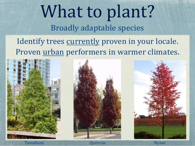 Urban Tree Selection in a Changing Climate