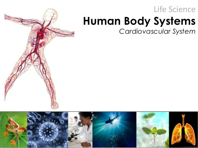 Life Science Human Body Systems Cardiovascular System