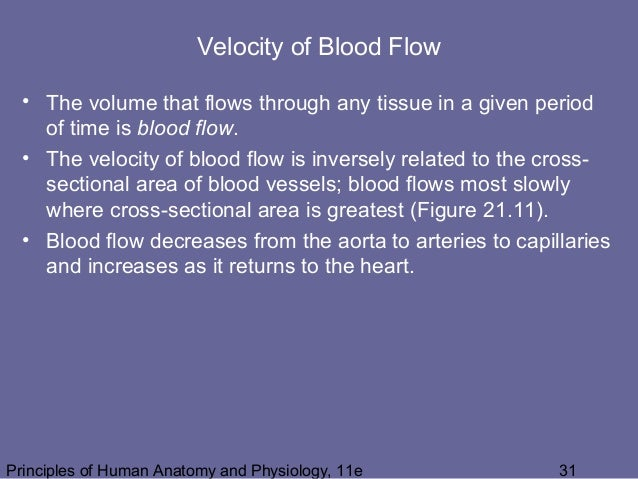 21 [chapter 21 the cardiovascular system blood vessels and
